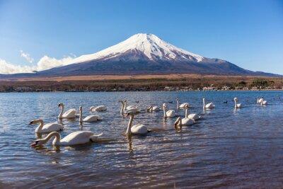 Наклейка Белый лебедь swimimg в Яманака озеро, озеро 5 Фудзи
