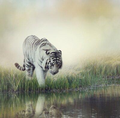 Наклейка Белый Тигр
