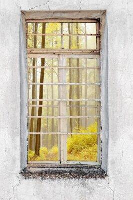 Наклейка Окно старого цемента дом с видом на лес