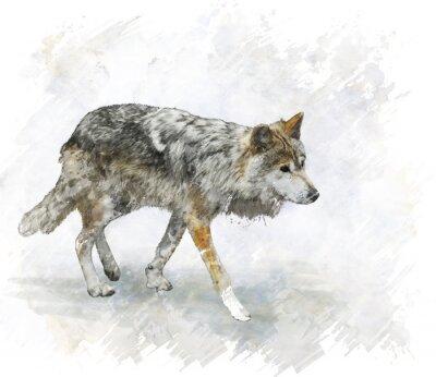 Наклейка Волк Акварель