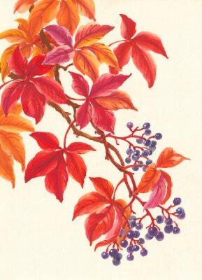 Наклейка Дикий виноград осенью, красные листья и ягоды, живопись.