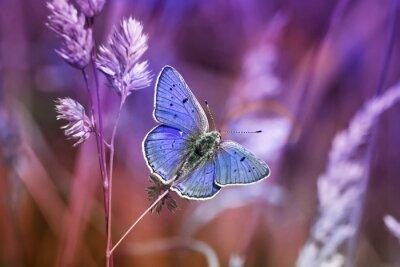 Наклейка маленькая бабочка среди травы в сиреневых тонах