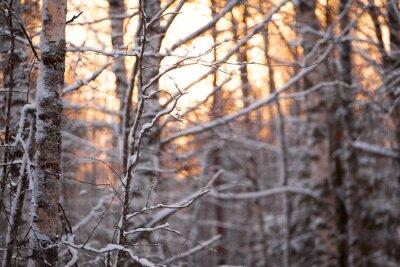 Наклейка берёзовый лес
