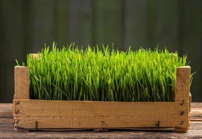 Наклейка Молодые зеленые ростки